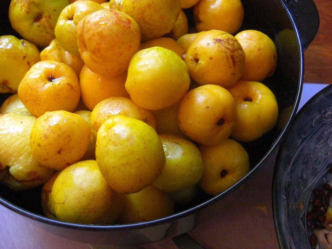 Flowering quince fruit recipes